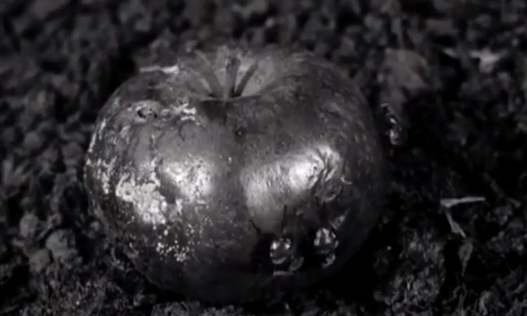 Mogwai reflejan el deterioro del planeta en su nuevo videoclip